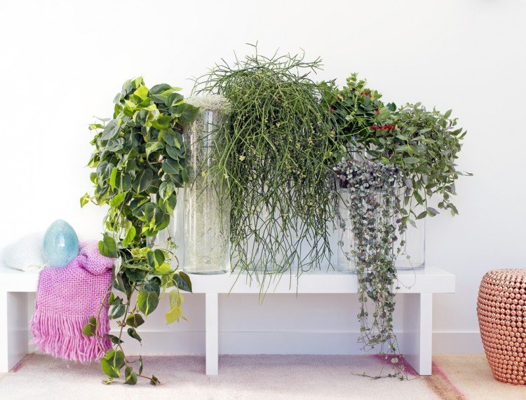 Woonplant september: hangplanten - PlantPlezier.nl