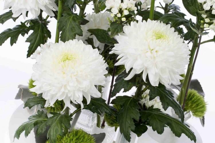 Meer kleur met chrysant - PlantPlezier.nl