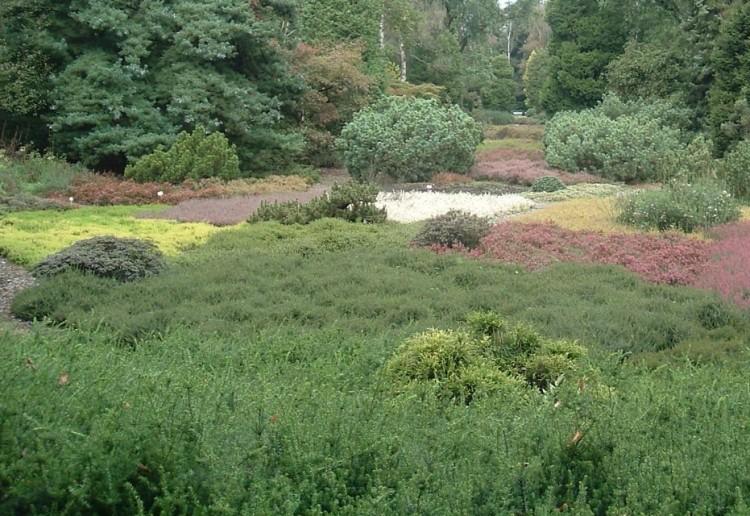 Hoe maak je een rustgevende tuin - PlantPlezier.nl