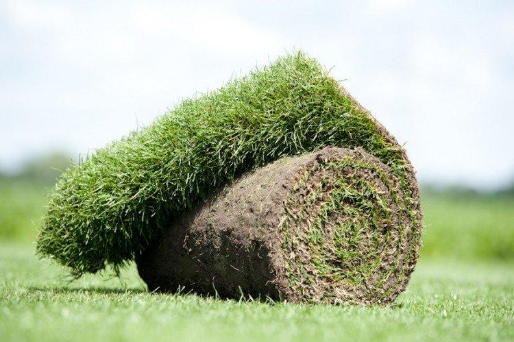 Gras zaaien of leggen - PlantPlezier.nl