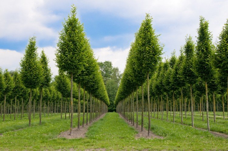 Bomen planten in nieuwe tuin - PlantPlezier.nl