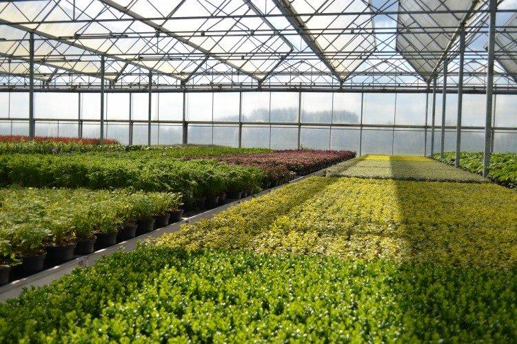 GroenVandaag - PlantPlezier.nl