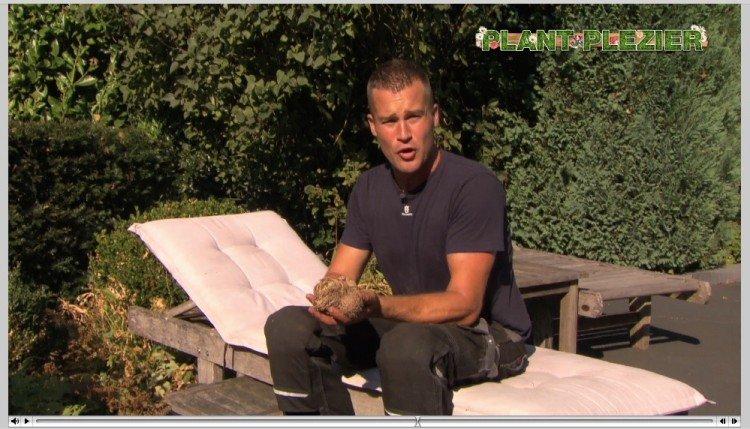 Win een Roos van Jericho - PlantPlezier.nl