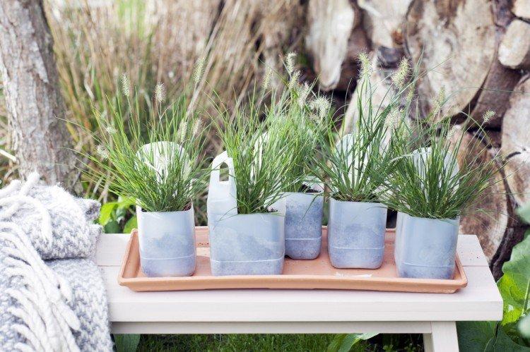 Tuinplant van de Maand september: borstelveergras - PlantPlezier.nl
