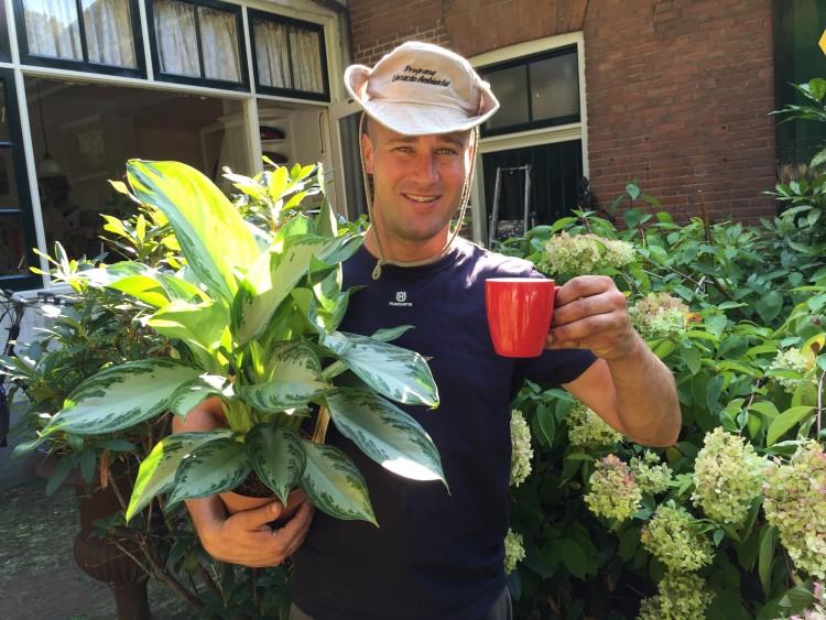 Zeg maar ja tegen de Aglaonema - PlantPlezier.nl