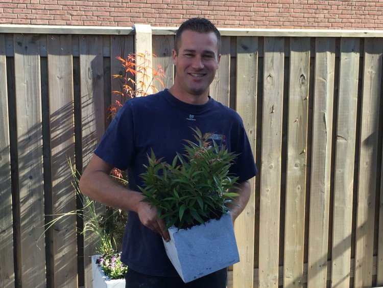 Tuinplant oktober: Leucothoe - PlantPlezier.nl