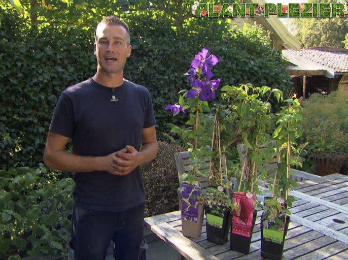 Klimplanten uitzoeken - PlantPlezier.nl