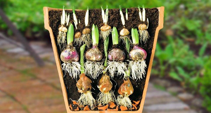 Etagebeplanting - PlantPlezier.nl