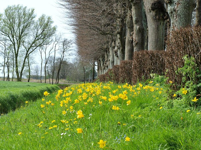 Wilde bloembollentuin - PlantPlezier.nl