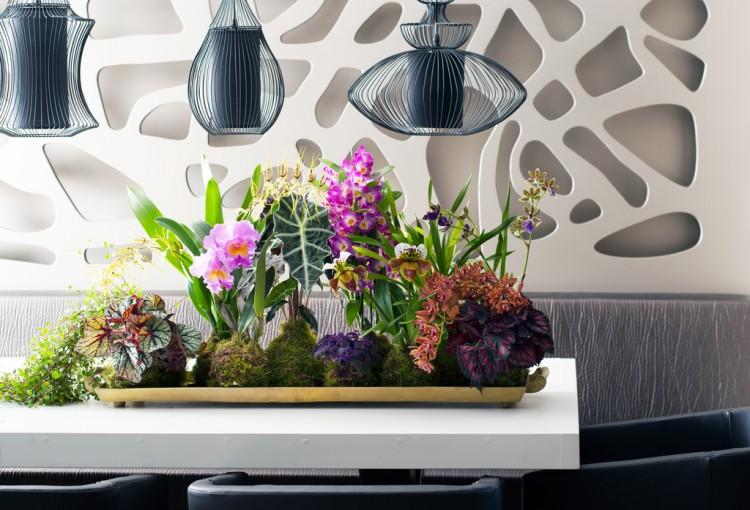 Woonplant: bijzondere orchideeën - PlantPlezier.nl