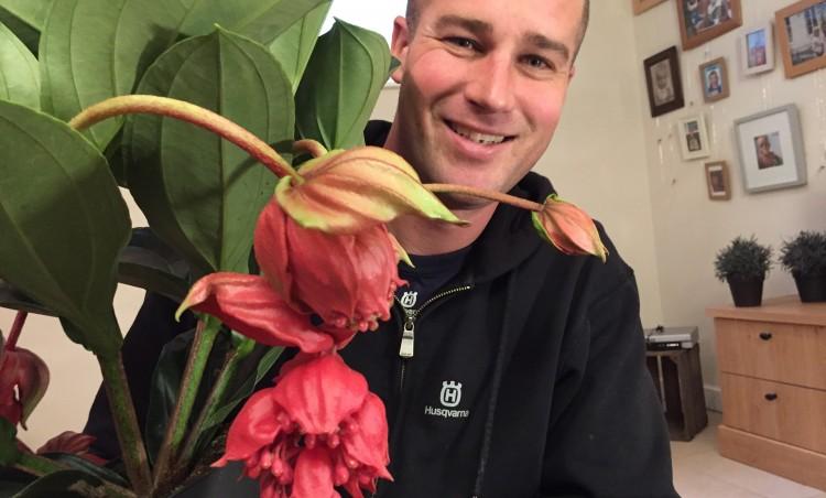 Woonplant van de Week: Medinilla - PlantPlezier.nl