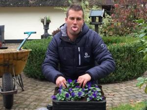 ivo - plantplezier