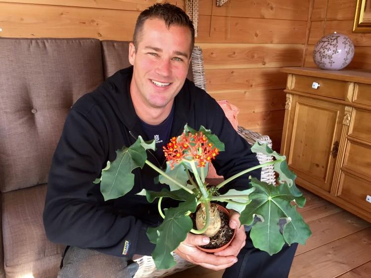 Niet op de fles met een Jatropha - PlantPlezier.nl