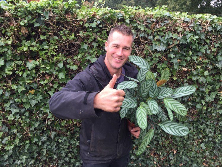 Een 'troetel' kamerplant als huisdier - PlantPlezier.nl