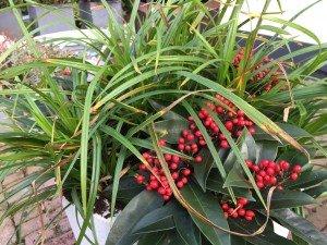 Plantplezier plantenlijst