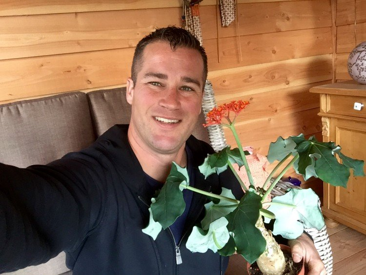 plantplezier - ivo - flessenplant - jatropha
