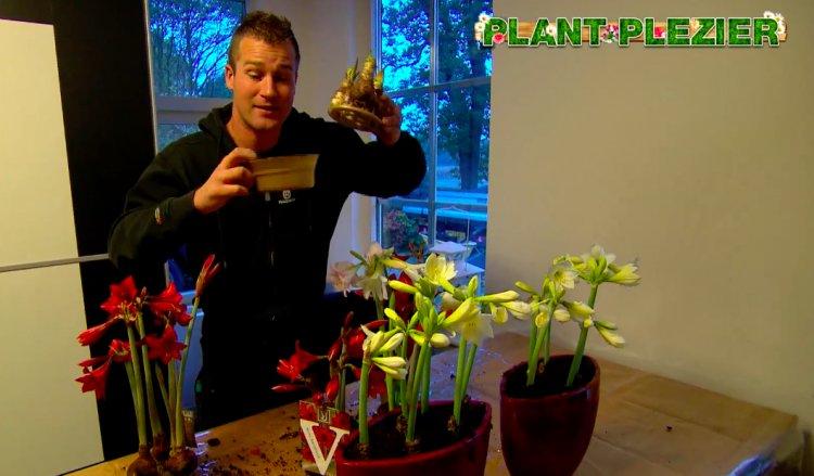 Sonatini tip van Ivo - PlantPlezier.nl