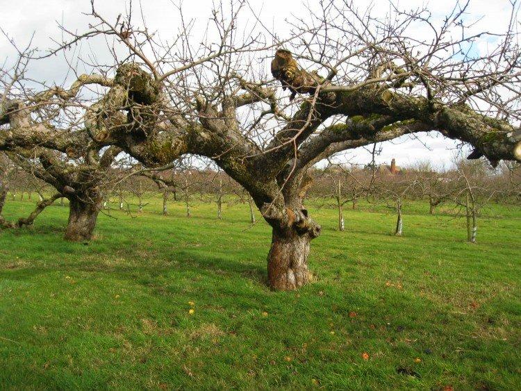 Welke grond bij appelboom? - PlantPlezier.nl