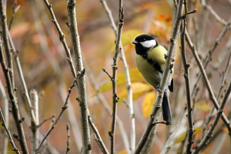 Vogels in de tuin - PlantPlezier.nl