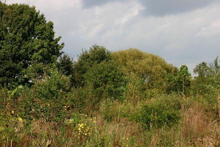 Voedselbos - PlantPlezier.nl