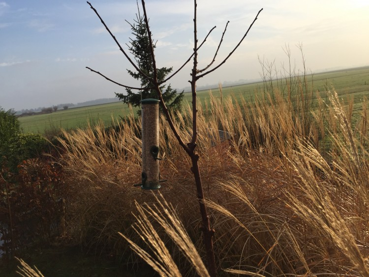 Vogels voeren in de winter - PlantPlezier.nl