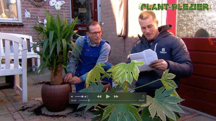 Fatsia vraag - PlantPlezier.nl