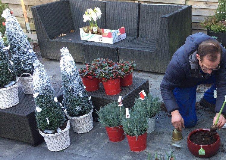Een witte Kerst voor iedereen - PlantPlezier.nl