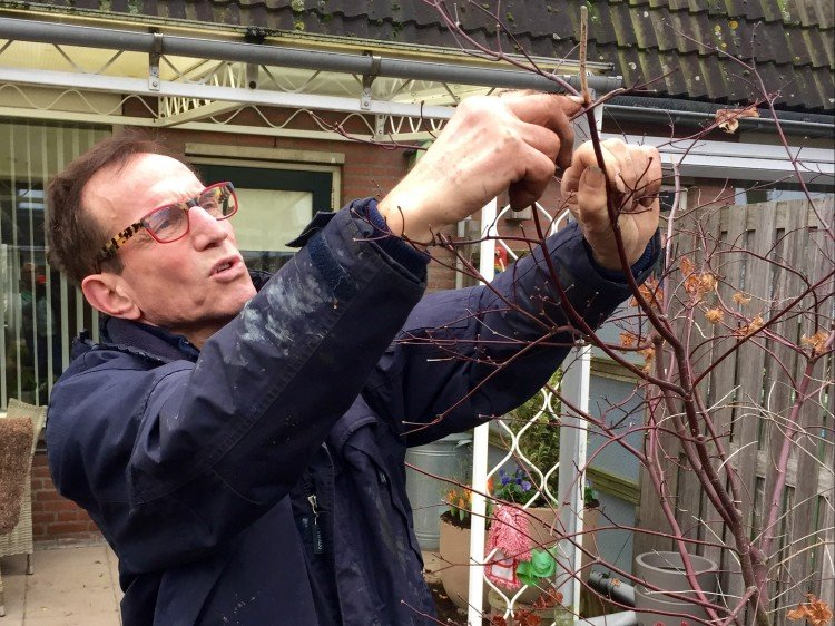 Wat kun je in januari snoeien? - PlantPlezier.nl