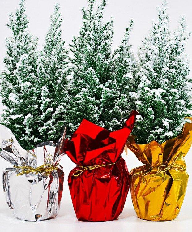 kerstboom-met-sneeuw