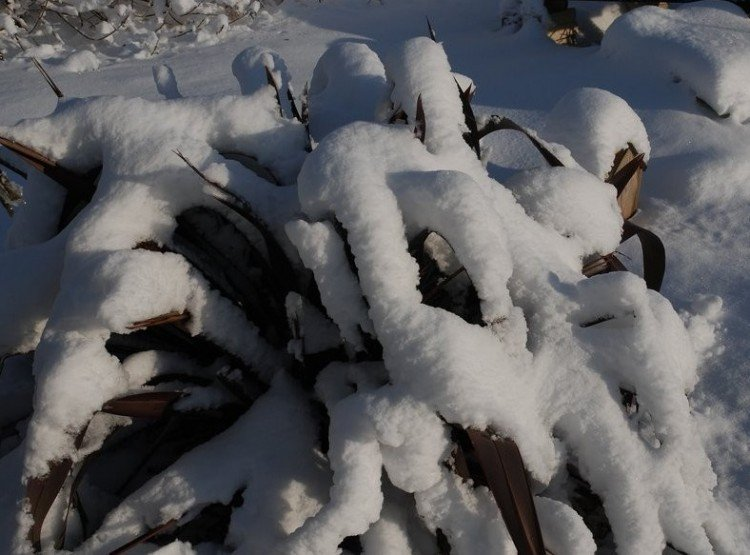 Sneeuw vs. ijs - PlantPlezier.nl