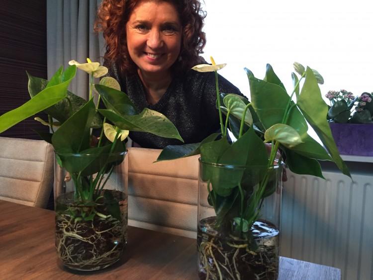plantplezier - column - jorna - anthurium -