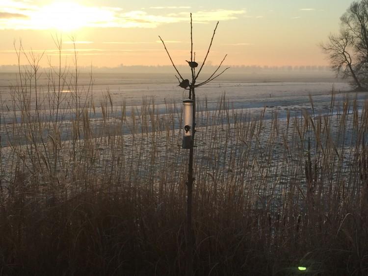 In een kale boom biedt vogels weinig bescherming in de winter. Coniferen doen dit wel