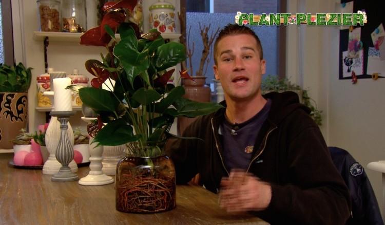 Tips van Ivo - PlantPlezier.nl