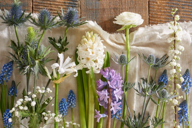Bloemen in januari geven geur, kleur en fleur in huis - PlantPlezier.nl