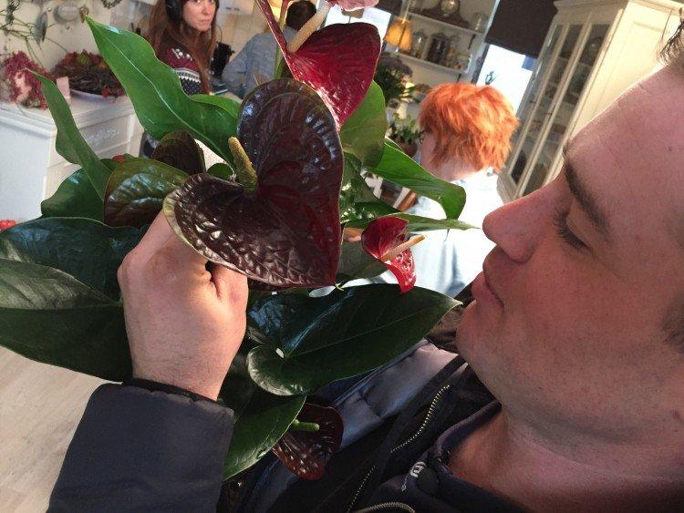 plantplezier - anthurium