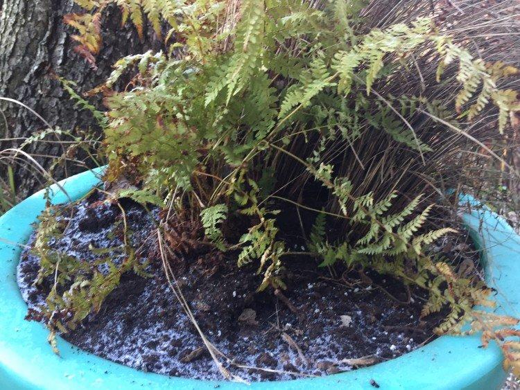 Compost rond de pollen - PlantPlezier.nl