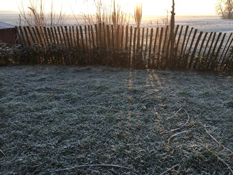Bevroren gras - PlantPlezier.nl