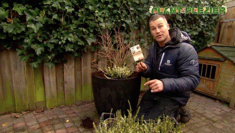Prunus - PlantPlezier.nl