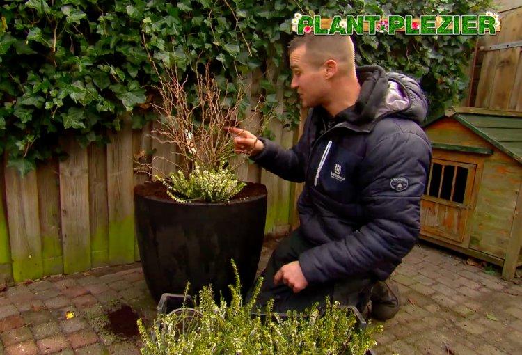 Een bijzondere struik - PlantPlezier.nl