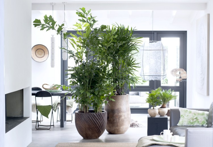 Woonplant van de Maand februari: Exclusieve palmen - PlantPlezier.nl