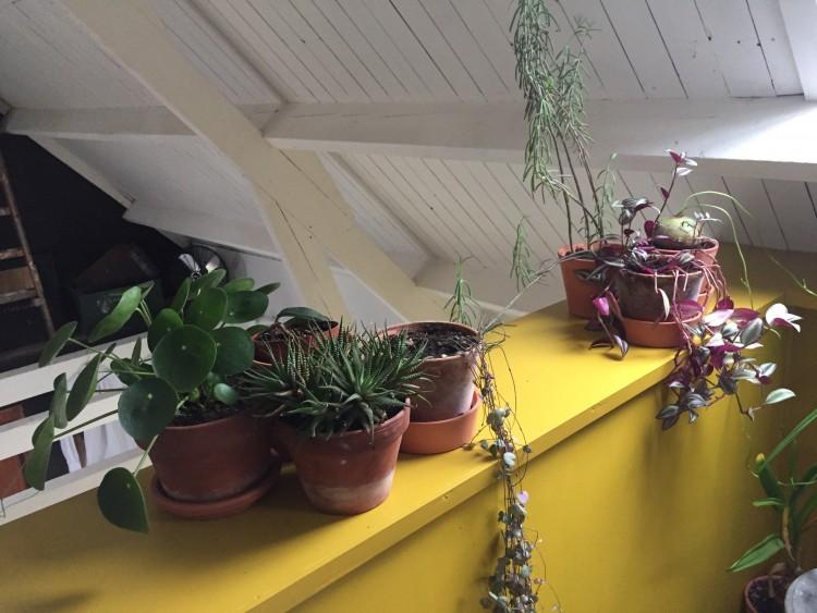 Februari kamerplanten verpotten - PlantPlezier.nl