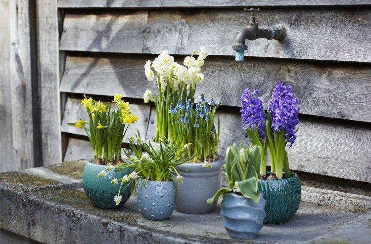 Voorjaarsbollen op pot zijn de Tuinplanten van de Maand - PlantPlezier.nl