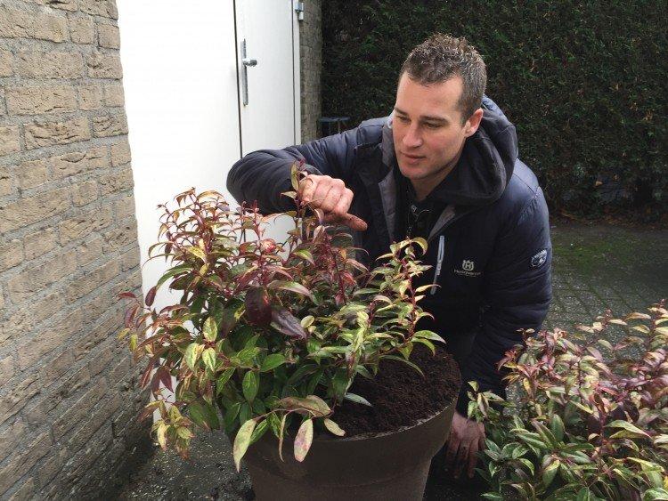 Plantenlijst - PlantPlezier.nl
