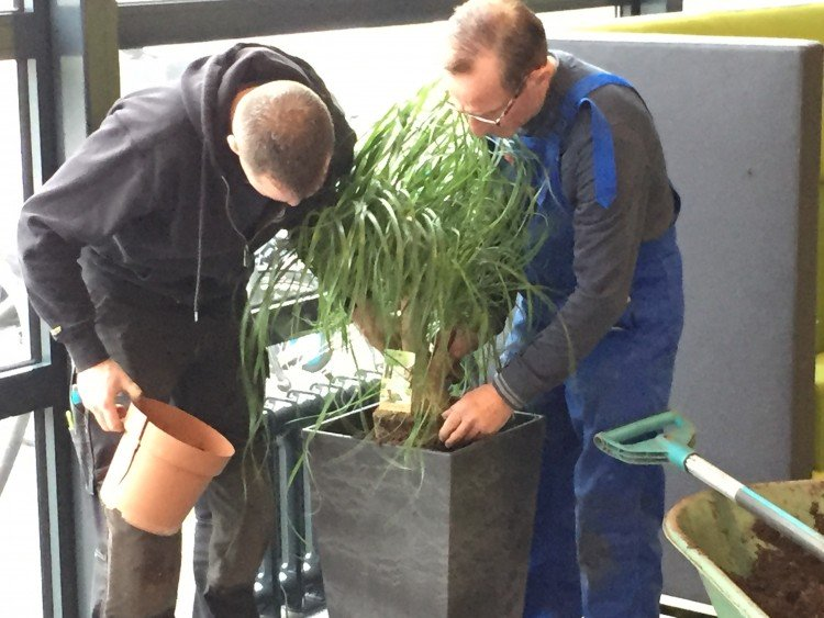 Plantenlijst 18 februari - PlantPlezier.nl