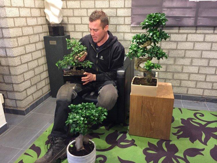 Bonsai - PlantPlezier.nl