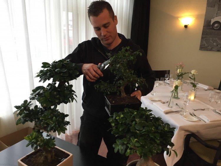 Bonsai is helemaal niet saai - PlantPlezier.nl