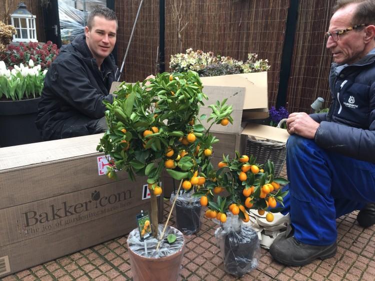 Rob en Ivo - plantplezier - bakker.co - citrus