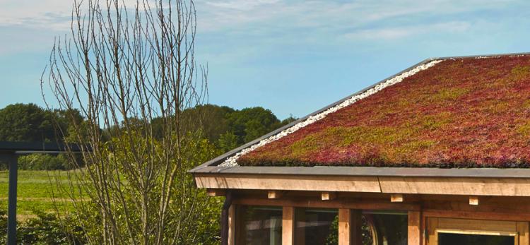 Een dak van groen - PlantPlezier.nl