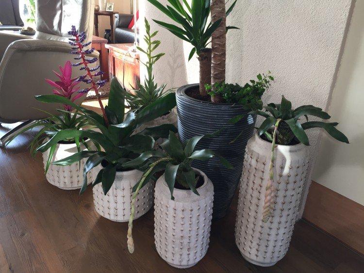 Vriesea 'Lacy' - PlantPlezier.nl