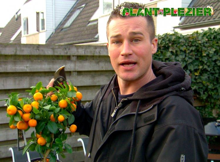 Extra informatie over citrus - PlantPlezier.nl